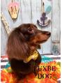 わんちゃんのトリミングサロン★LUXBE DOG DOG★
