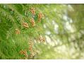 花粉の季節がやってくる前に!!スパニストRYO