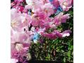 春らしく♪