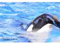 #名古屋港水族館