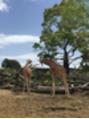 動物園へ行ってきました!