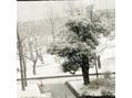 雪ですね!!