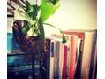 LUXEの植物♪