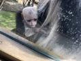 デュアルケアベルス(DUAL CARE bellus)動物園