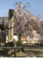 醍醐寺までお散歩☆
