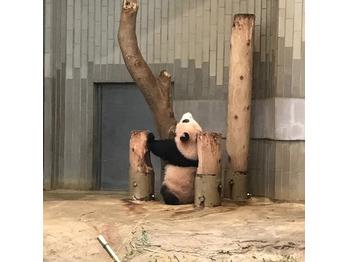 上野動物園 パート2_20180131_3