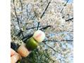 4月の桜\(^-^)/