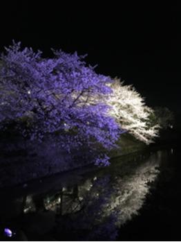 夜桜 ☆ 満開です_20180331_1