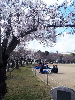 桜     ヘッドスパ専門店_20190410_3