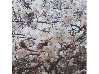 桜     ヘッドスパ専門店_20190410_2