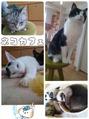 猫カフェ☆