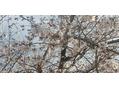 花見の季節(#^.^#)