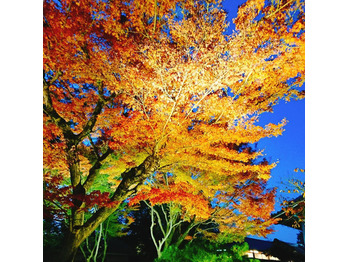 京都_20171211_2