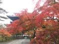 秋の京都♪