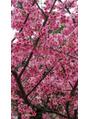 桜(^^)