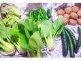 もぎたて野菜φ(´ー`*)