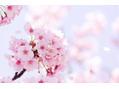春の紹介キャンペーンを実施中です!(^^)