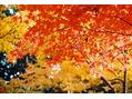 秋のヘアケアー