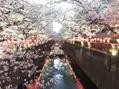桜が散る前に