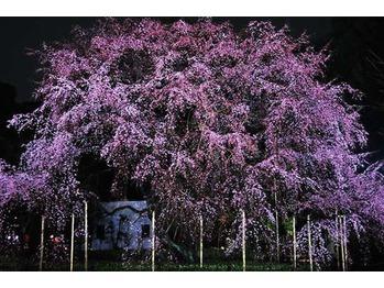 春だ!花見だ!☆スライドカット講習会☆_20160328_1