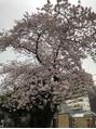 桜が綺麗な季節ですね☆