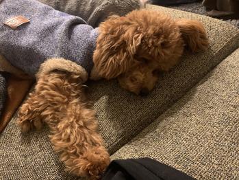 愛犬ミモちゃん_20200121_1