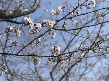 春のお出かけ_20180329_1