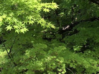 福岡市動植物園♪_20180430_4