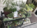 シータの植物たち