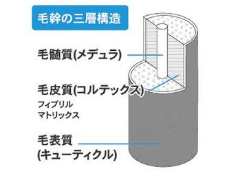 髪の構造(新宿/新宿駅)_20190116_1