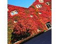 紅葉の季節、、wataru