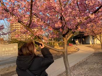 桜~♪_20200319_2