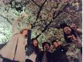 春だぁー!!桜だぁ-!!