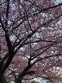 ☆春ですっ☆