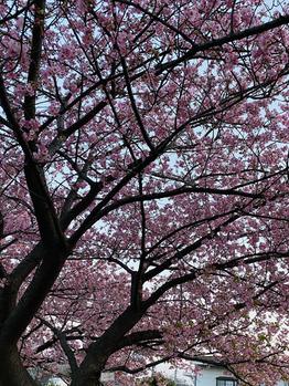 ☆春ですっ☆_20210221_1