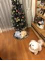恵比寿☆plumy☆クリスマスツリー