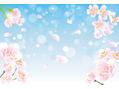 桜サクサク