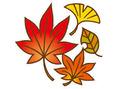 秋の抜け毛対策は食生活