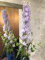 今週のお花