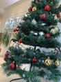 クリスマスツリー始めました