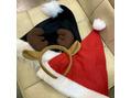 merry christmas eve ★