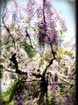 春は花が綺麗ですね!