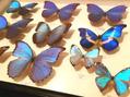 「世界の昆虫展」