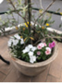 鉢植えの花を変えました!(曳舟店)
