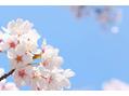 春が来ますね!