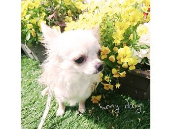 HAPPYBIRTHDAY☆yuzu_20170415_2