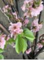 葉桜を楽しむ