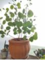 コーラルの植物達