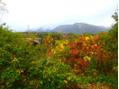 そろそろ秋らしくなってきましたね。
