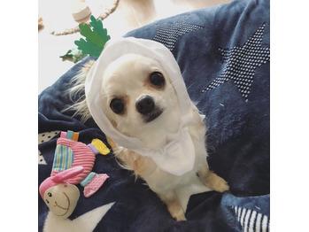 愛犬が可愛すぎるのでもっと可愛くしてみました_20180323_1